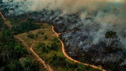 Escándalo: cómo se organizaron las criminales quemas en la Amazonia