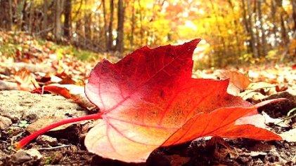 Nos robaron el otoño