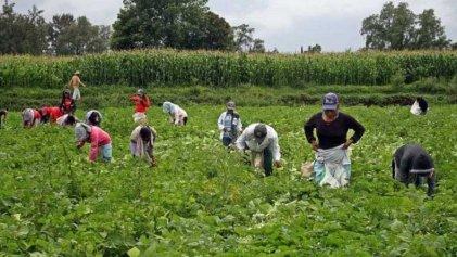 Usar y tirar: los jóvenes migrantes son mano de obra barata para el gobierno español