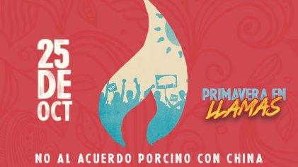 #PrimaveraEnLlamas: festival virtual contra el acuerdo porcino entre China y Argentina