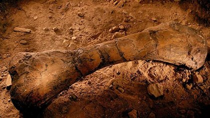 Encuentran en La Rioja fósiles de dinosaurios de hace 70 millones de años