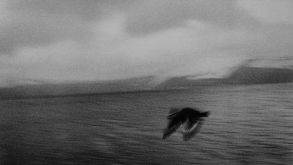 Adriana Lestido: Antártida en negro y blanco