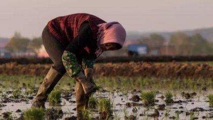 Principal provincia agrícola de China prohíbe transgénicos