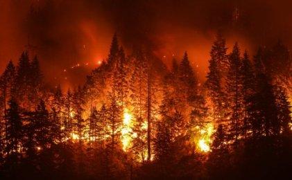 Los incendios en el área mediterránea son una catástrofe originada por el lucro capitalista