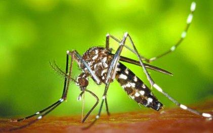 Tucumán avanza rápidamente a los 3.000 casos de dengue