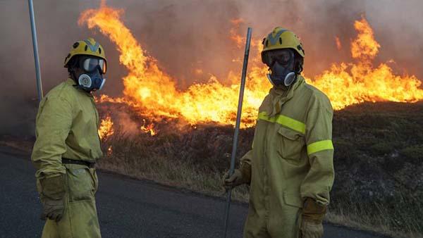 Tanta tierra quemada, ¿qué opinan los trabajadores forestales?